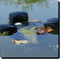 Teich Oberflächenabsauger Schwimmskimmer gegen Herbstlaub